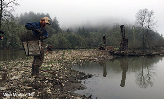 Restoring The Willamette River Confluence
