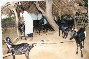 Livelihood development