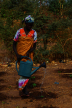 A female farmer waters her baby trees in her Fores