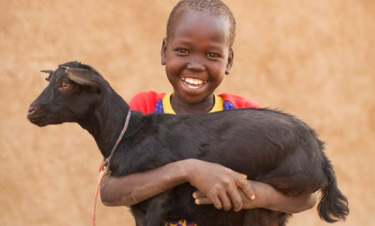 Buy 50 goats for Kyaninga CDC - Kids 4 Kids