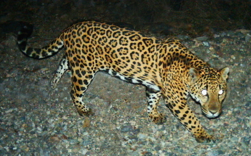 Protect critical understudied habitat in Mexico