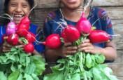 Teach 150 Maya Girls to Grow Vegetables