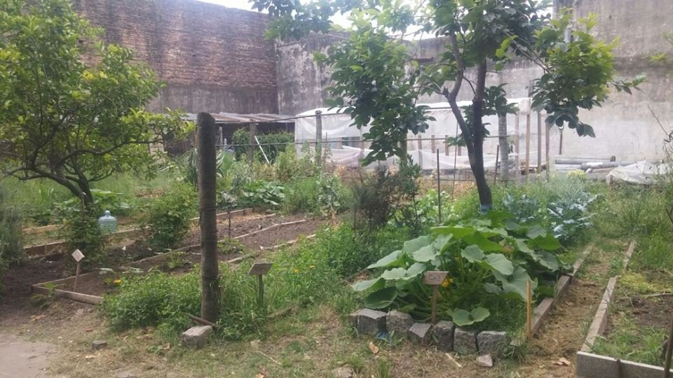 Build an Organic Garden for Children and Elderly