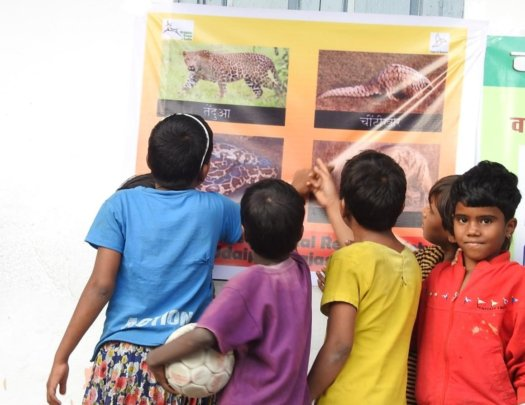 Students recognising the pangolin on display board
