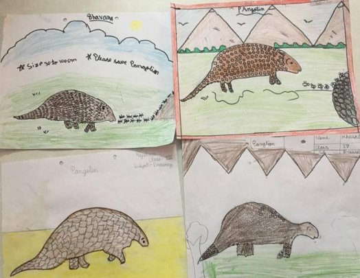 Pangolin sketches by the students
