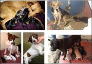 Spay/Neuter and Adoption of Street Animals