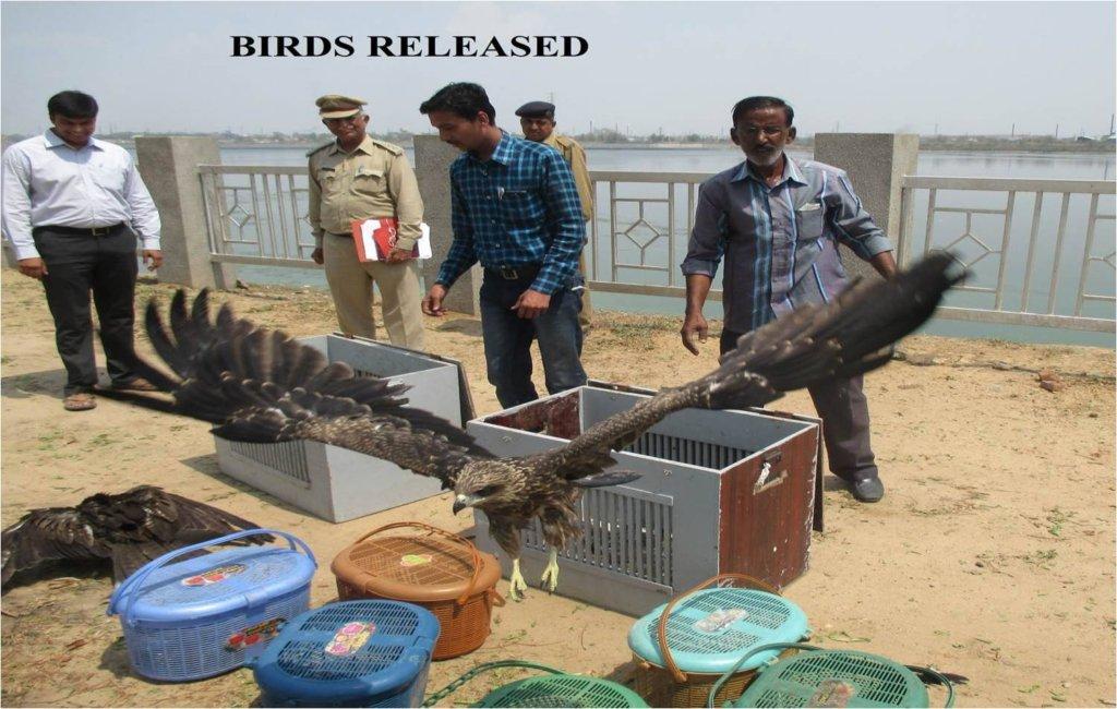 Avian Rehabilitation