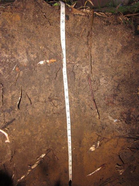 Fertile soils after treatment
