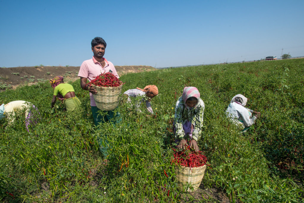 Support Organic Farms and Schoolgardens in India