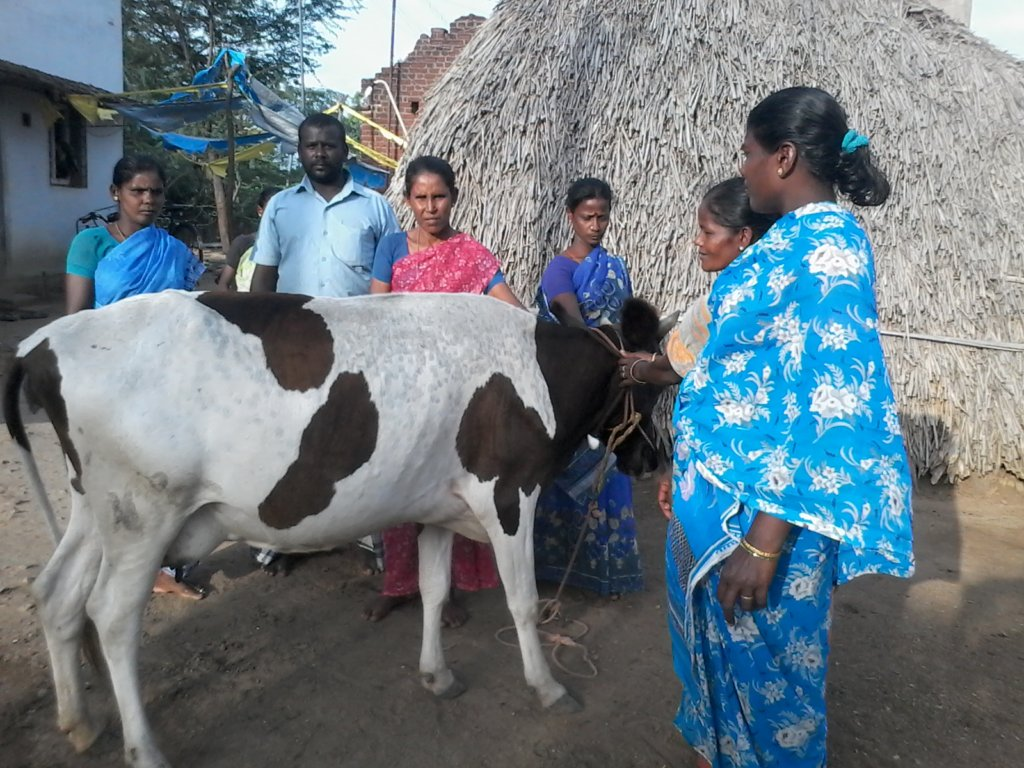 Save the Indian Cow  - It Saves People and Globe