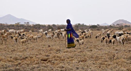 Nomadic woman pastoralist