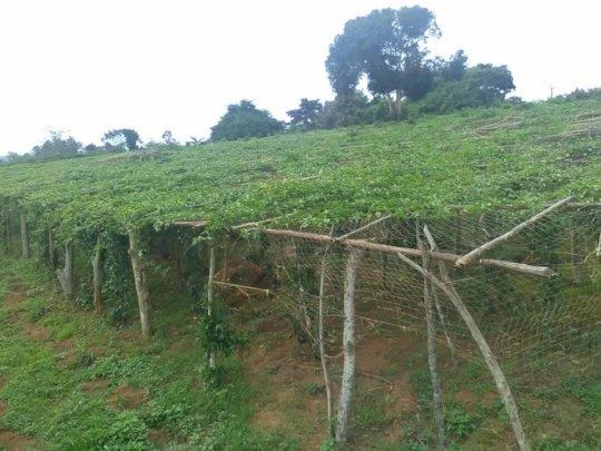 Organic farming promotion