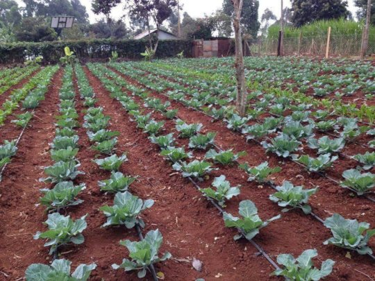 My Vegetable Campaign transforms lives o children