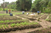 Help Farmers Fight Hunger & Child Abuse in LIberia