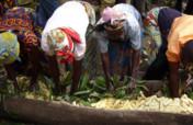 Boost Rural Womens Juice Processing Plan in Uganda