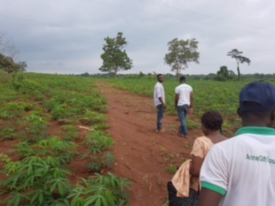 AnneGift Foundation Team in the cassava Farm