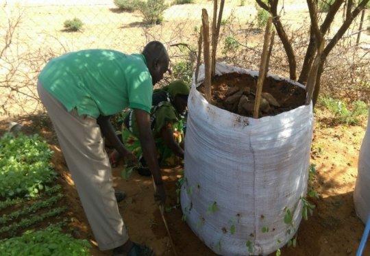Preparing a nutrition garden in Mandera County
