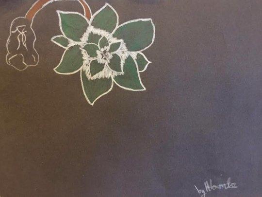 Flowers - Hlomla