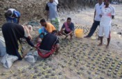 Restore Corals for 400 Fisherfolks in Wasini