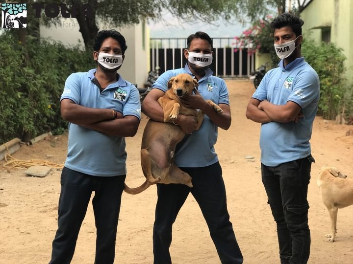TOLFA Staff in masks with an amputee shelter dog