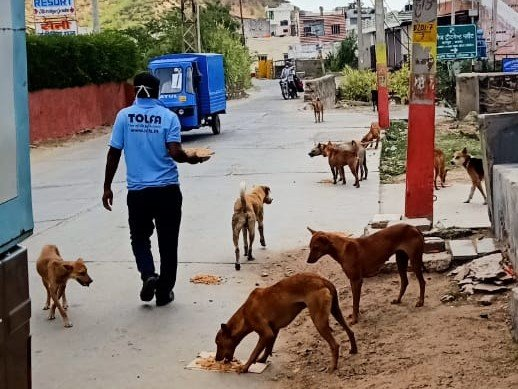 TOLFA street feeding programme helps dogs survive