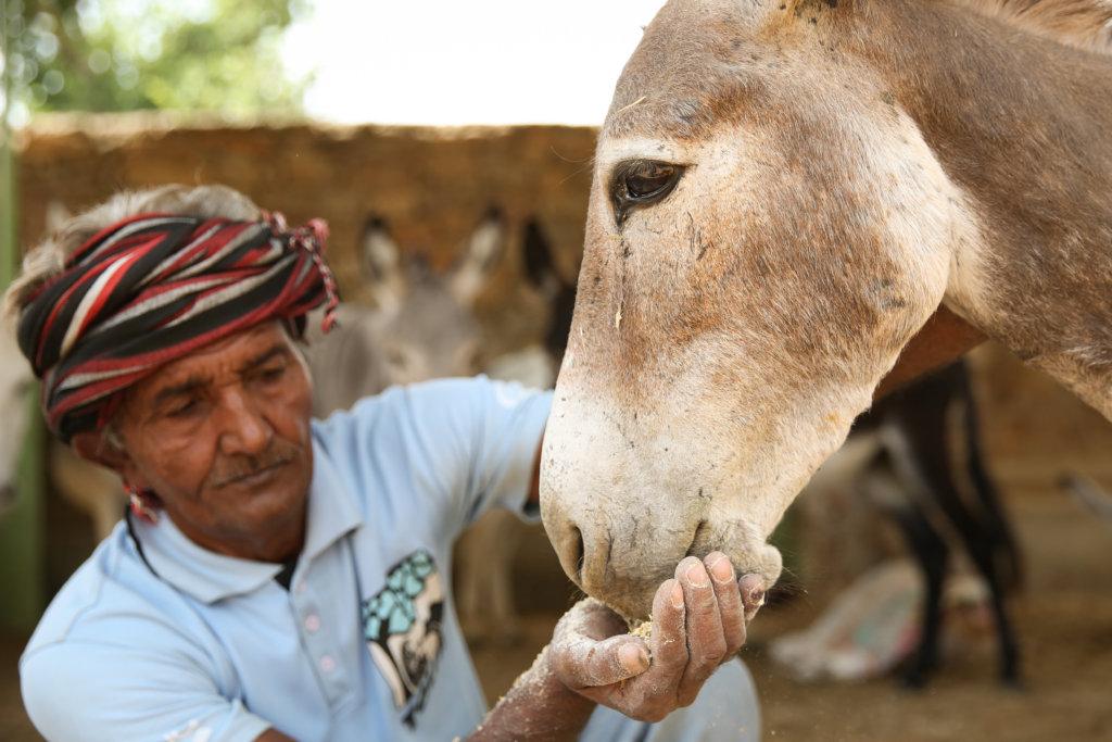 Rescue Sick & Injured Street Animals in India