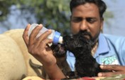 Rescue Sick & Injured Street Animals in India
