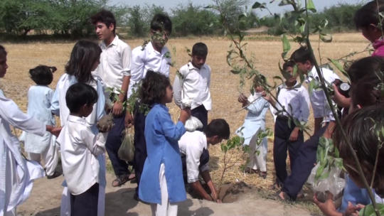 Planting the saplings in their villages