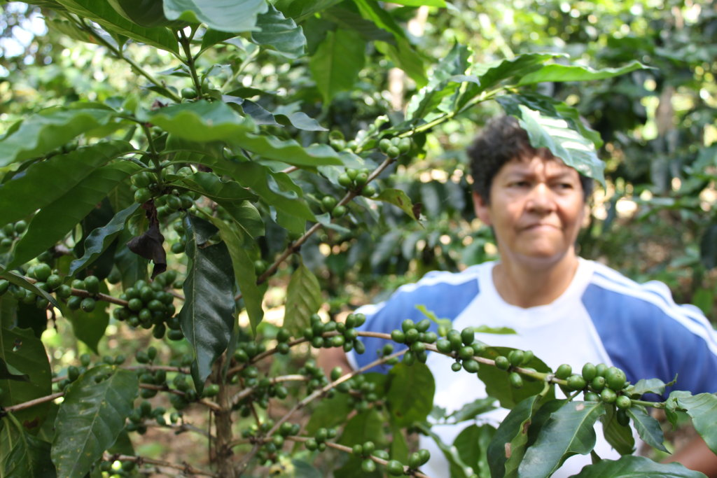 Internet and ICT for Coffee Growers in Colombia