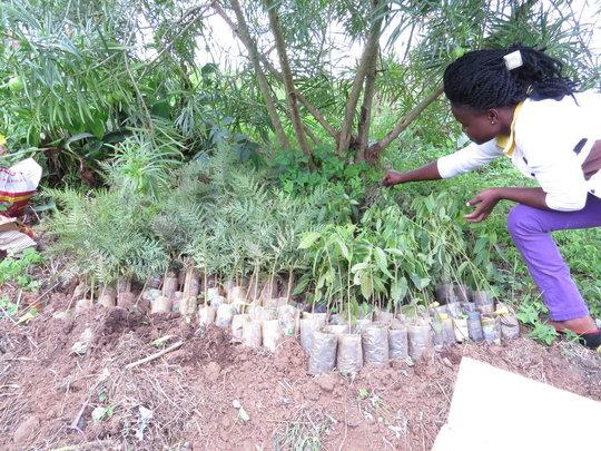 Planting Secret Gardens