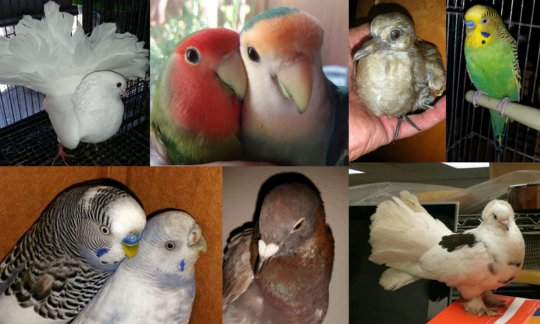 Some of our recently adopted birds.