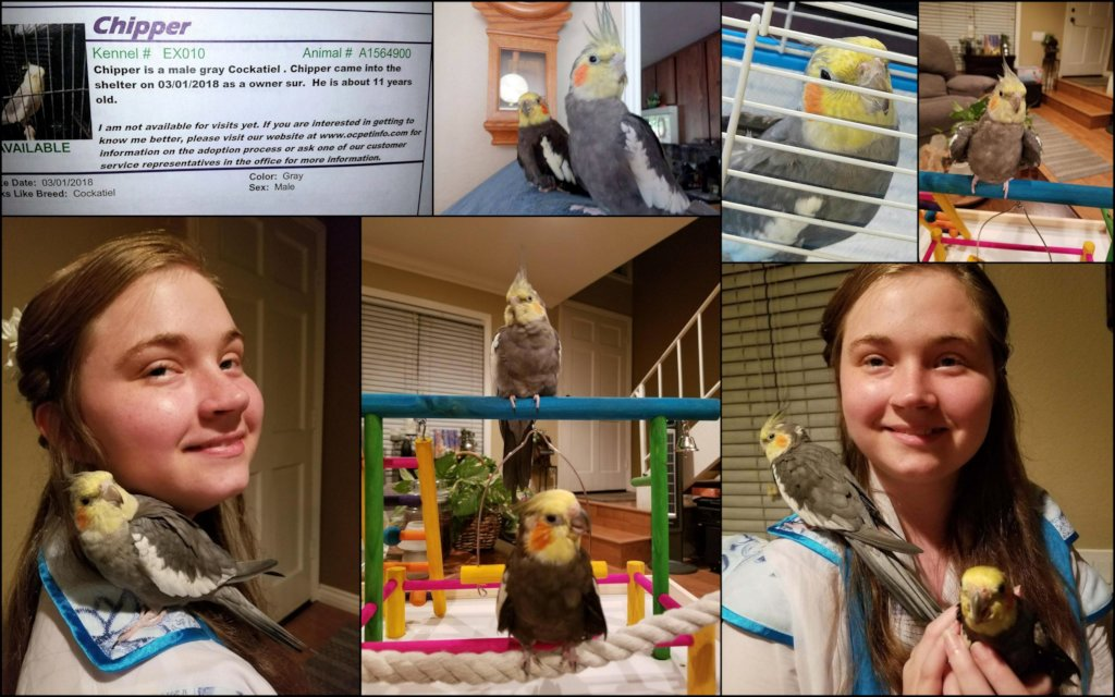 Reports from Avian Underdogs Rescue Association - GlobalGiving