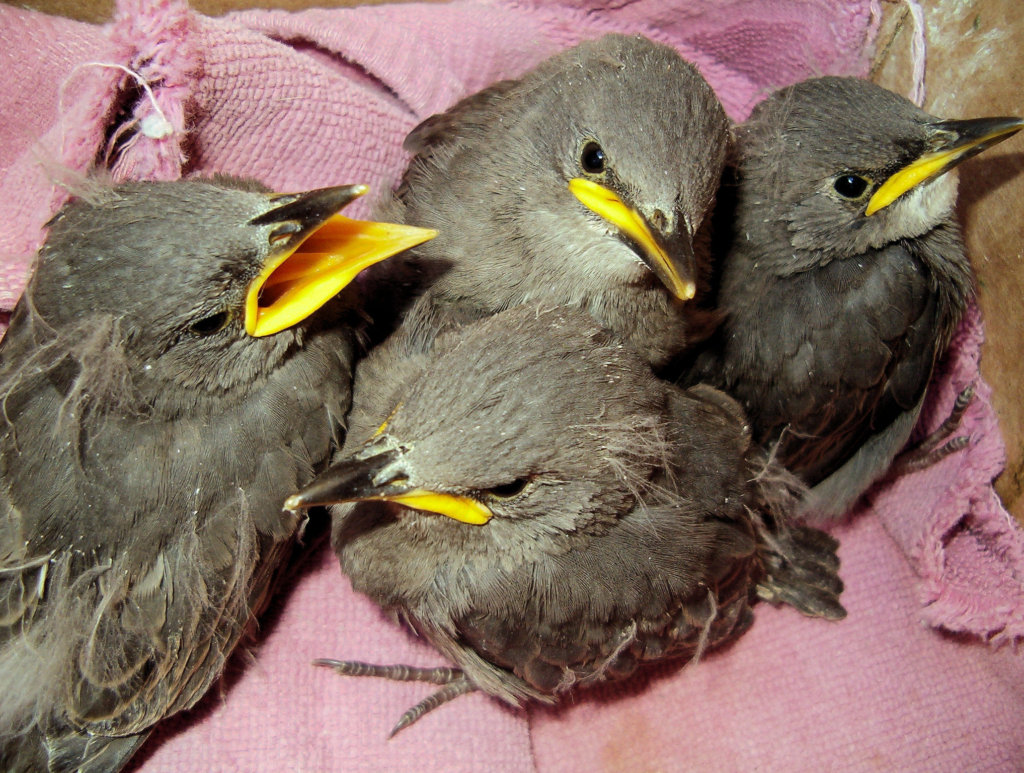 Save Sick, Injured, & Orphaned Birds - California