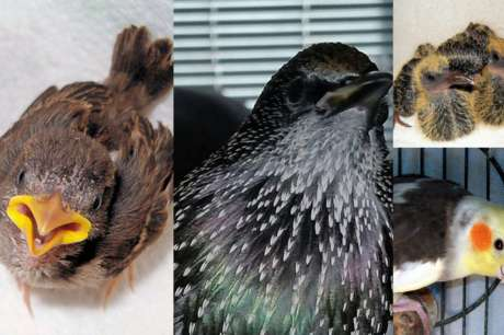 Save Sick, Injured, & Orphaned Birds - California