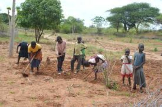 Educate 100 Orphaned Children Working in Agrifarms