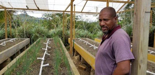 INMED Caribbean Aquaponics Specialist Paul Barrett