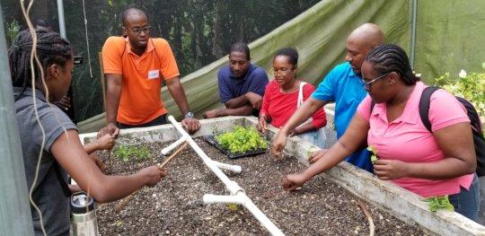 Day 2 farmer training - planting seedlings