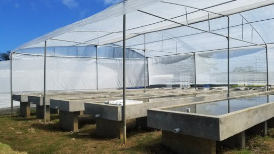 CASE growbeds are ready for seedlings