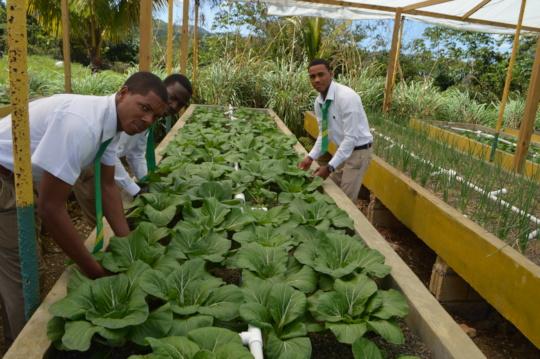 Future aquaponics farmers