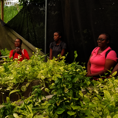 Farmers get hands-on technical + business training