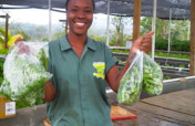 Fund Jamaican Farmers in Climate-Smart Aquaponics