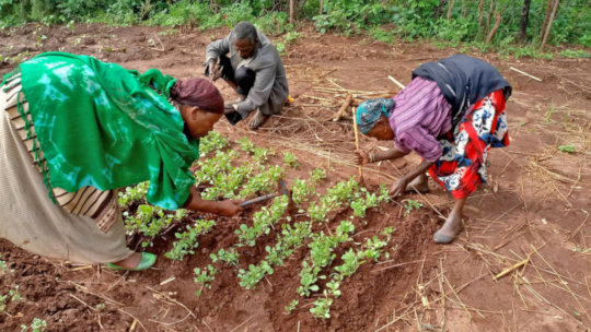 Photo from Seed Programs International
