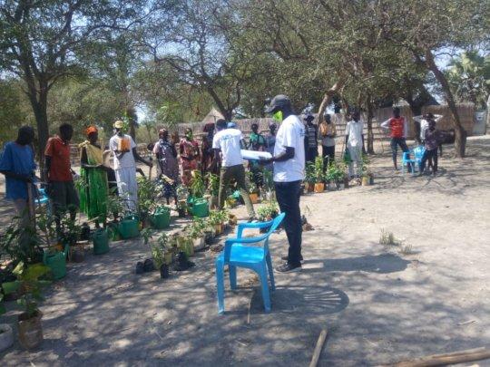 Distributing seedlings, Dhoreak, South Sudan