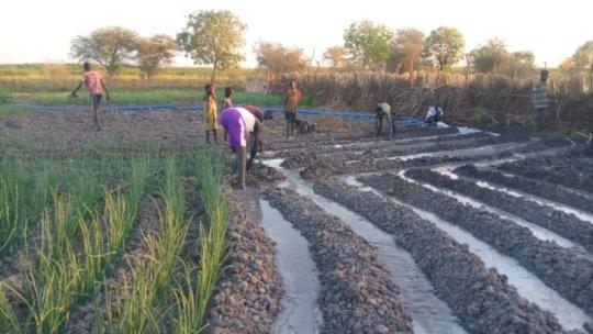 A new farm in Dhoreak.
