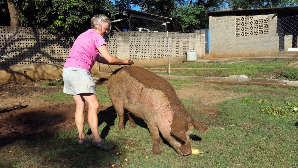 Our rescue Petal Pig gets a mudpack for sunblock