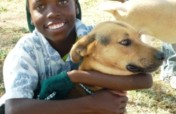 Survival of Animal Welfare Charity in Zimbabwe