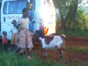 Goat Project
