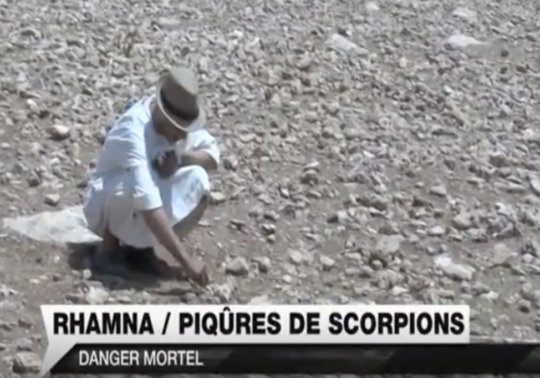 High risk of fatal scorpion sting for women