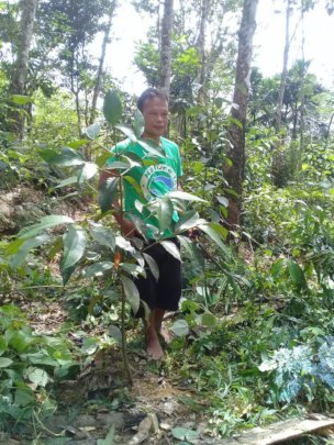 Darma Pinem monitors a fruit tree planting site.