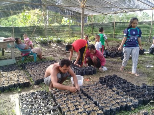 Preparing seedlings. Photo courtesy of Darma Pinem